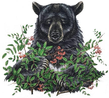 Bear Berries