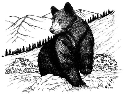 Black Bear (Pen Drawing)
