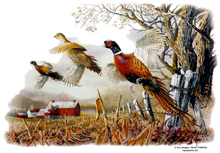 Pheasants in Cornfield