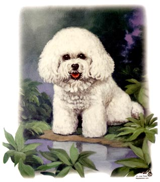 Bichon (Purple Background)