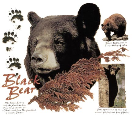 Black Bear with Info