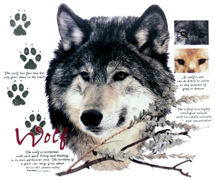 Wolf with Info